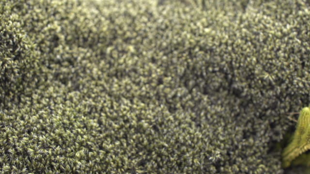 soft moss in iceland, slow motion close up - moos stock-videos und b-roll-filmmaterial