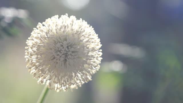 Soft of pollen.