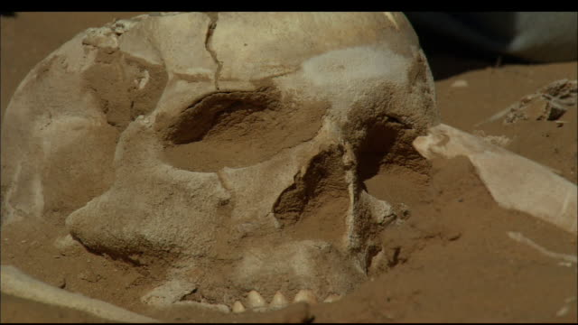 A soft-bristled brush sweeps sand away from a skull at an archaeological dig. Available in HD.