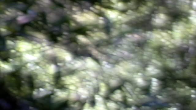 stockvideo's en b-roll-footage met soft-focus, leafy effect - softfocus