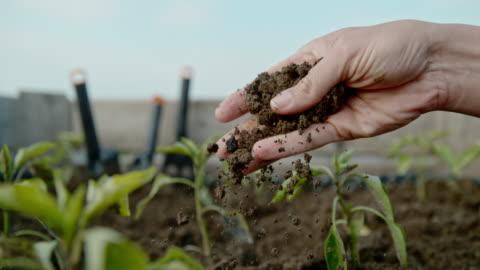 vidéos et rushes de cu super slow motion sol s'effritant et tombant de la main du jardinage de femme - graine