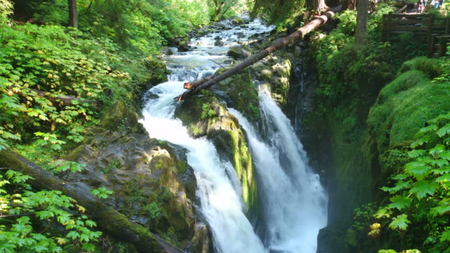 sol duc falls in olympic national park washington usa - olympic national park stock videos and b-roll footage