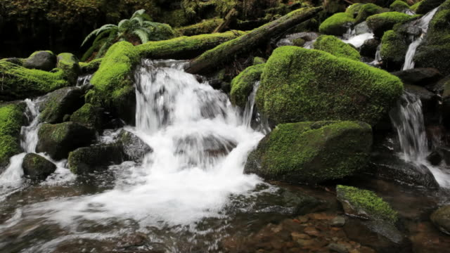 vídeos de stock, filmes e b-roll de ms, sol duc river and moss covered rocks, olympic national park, washington - olympic national park