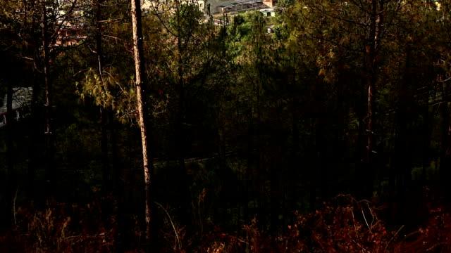 solan city, himachal pradesh/india - pinaceae stock videos & royalty-free footage
