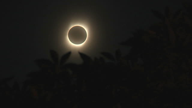 WS Solar eclipse with tree branches in foreground / Hangzhou, Zhejiang, China
