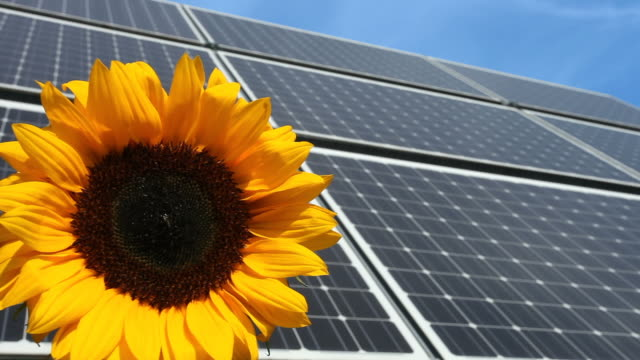 Solar Panel and a sunflower