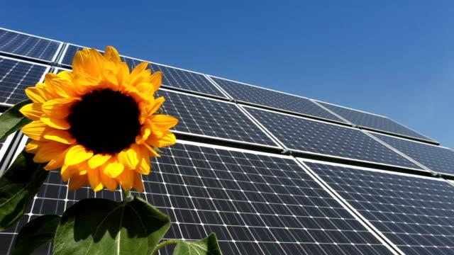 Pannello solare/girasole nel vento