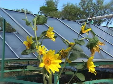 solarenergie power - staubblatt stock-videos und b-roll-filmmaterial