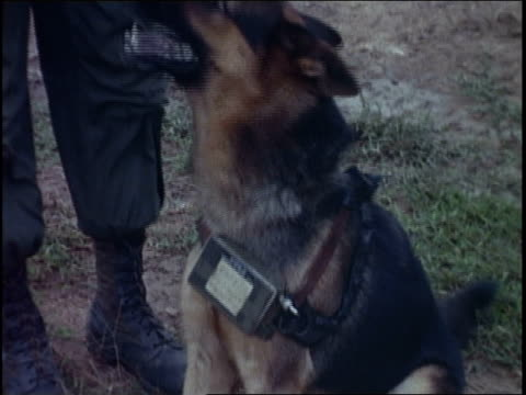 soldier attaching transmitter to dog / vietnam - guinzaglio per animale video stock e b–roll