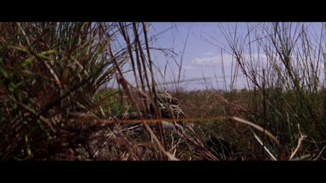 cu soldier crawling in grass and many parachutes drifting to ground / tokyo, japan - krabbeln stock-videos und b-roll-filmmaterial