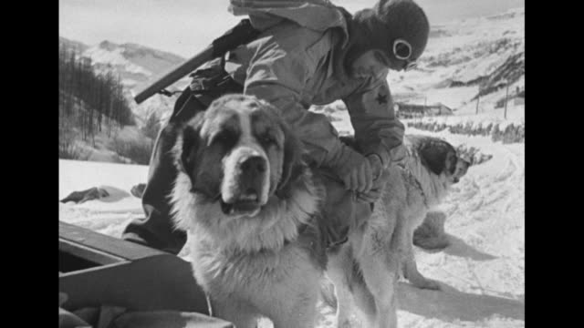soldier in goggles and padded jumpsuit places items in pack on saint bernard dog's back / dog walks down snowy steep incline to waiting soldier /... - skiwear stock videos & royalty-free footage