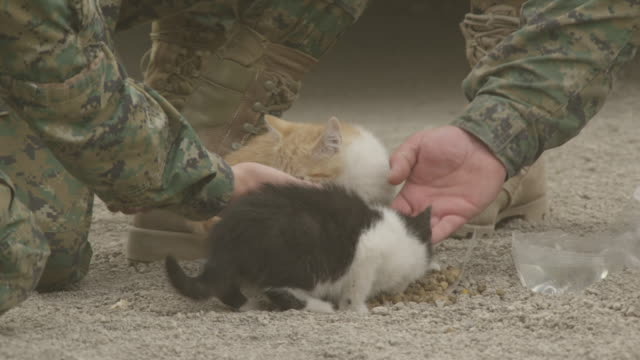 ensenada, chile - april 27, 2015: cu soldiers feed two kittens - 救う点の映像素材/bロール