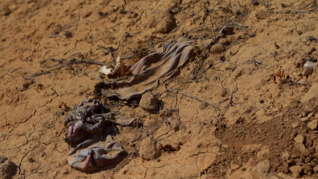soldiers guarding mass graves in the village of kojo iraq where islamic state militants commited genocide on the yazidi population - völkermord stock-videos und b-roll-filmmaterial