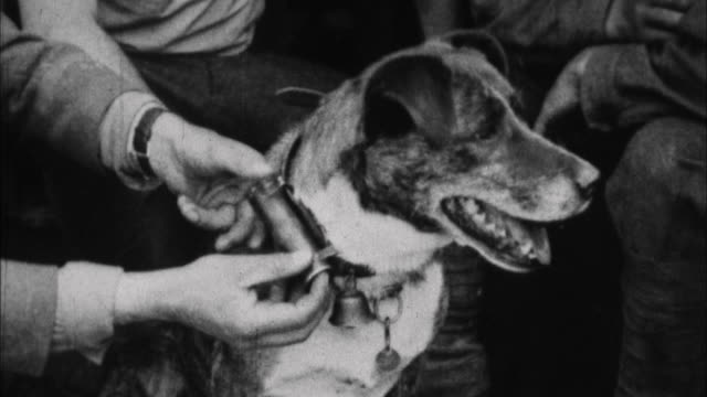 vidéos et rushes de soldiers look at message from messenger dog / france - world war 1