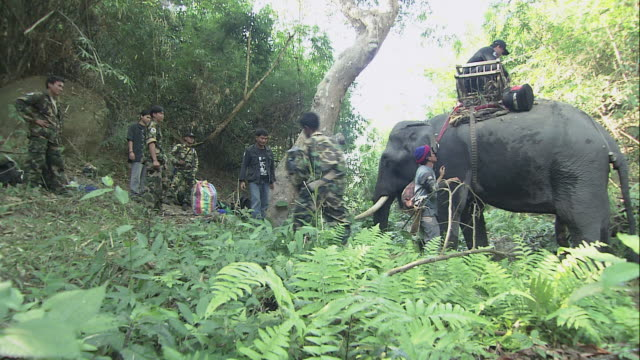 ws soldiers tending to a load-carrying elephant in the forest / thailand - 公園保安官点の映像素材/bロール