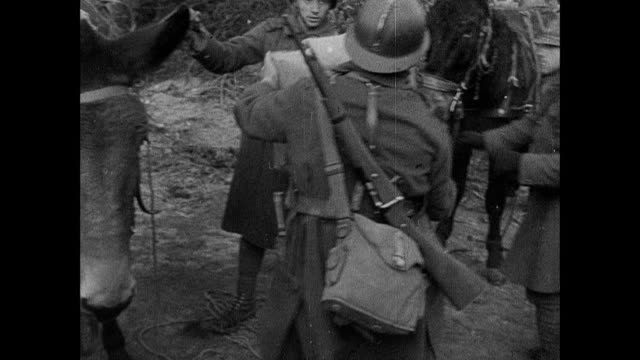 vidéos et rushes de montage soldiers unloading pack mules and handing out parcels, and bridled mule nuzzling wine bottles wrapped in straw for shipment / strasbourg, france - soldat
