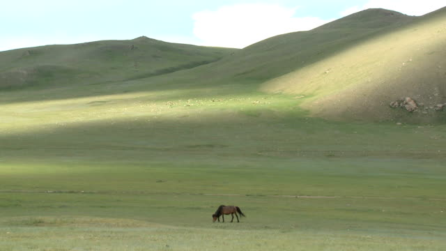 Solitary Horse Grazing On Mongolian Steppe