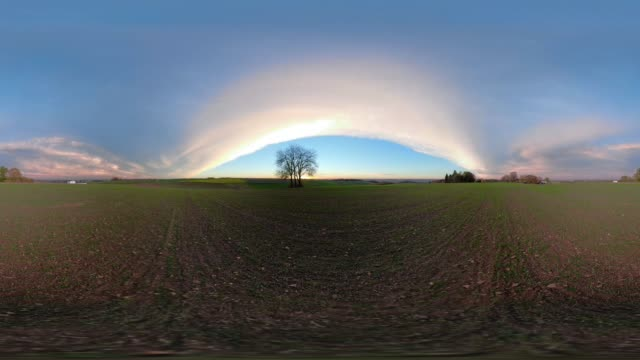 360 VR / Solitary Lime tree at sunset on field