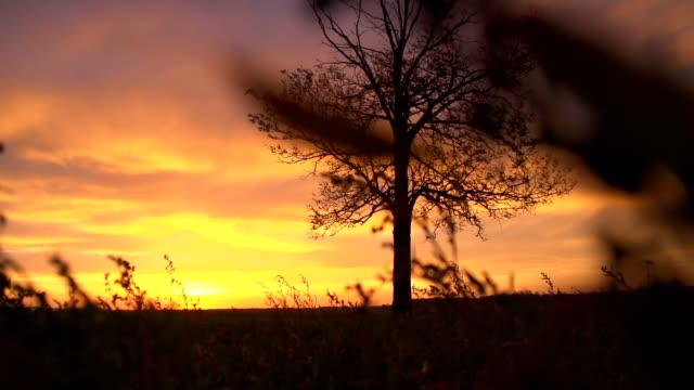 SLO MO regime albero al tramonto