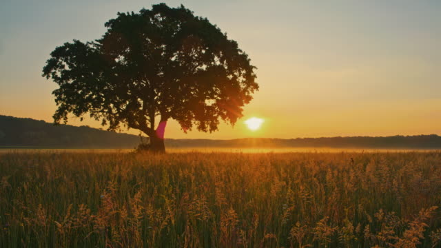 ds solitary tree at sunrise - prateria zona erbosa video stock e b–roll