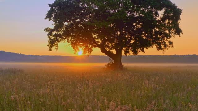 aerial solitary tree at sunrise - single tree stock videos & royalty-free footage