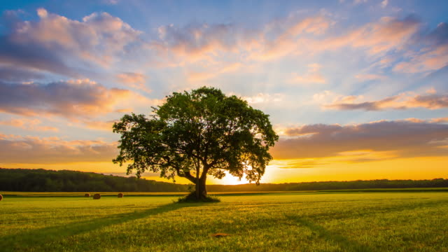 ds solitary tree at sunrise - le quattro stagioni video stock e b–roll
