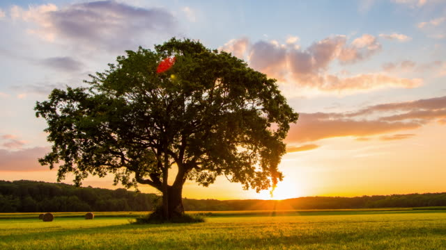 ds solitary tree at sunrise - sunny stock videos & royalty-free footage