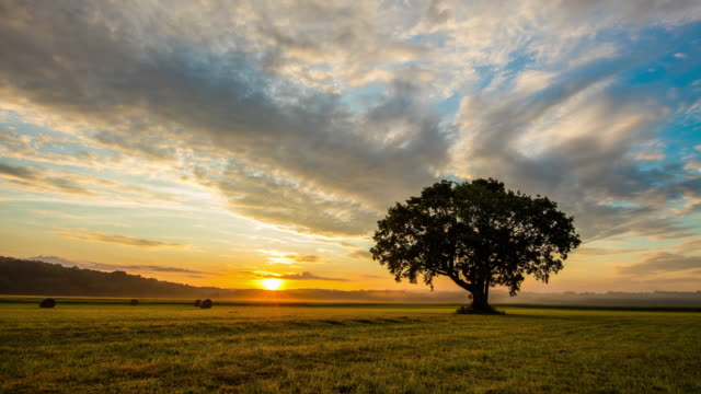 t/l 8k solitary tree at sunrise - hay bail stock videos & royalty-free footage