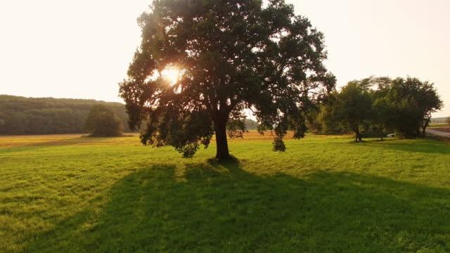 aerial einsamen baum bei sonnenaufgang - baum stock-videos und b-roll-filmmaterial