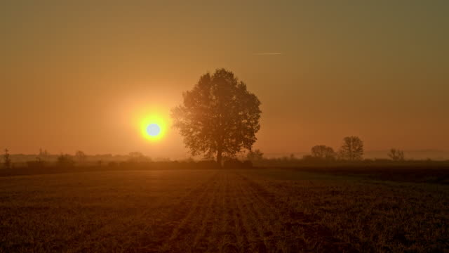 DS Solitary tree at sunrise