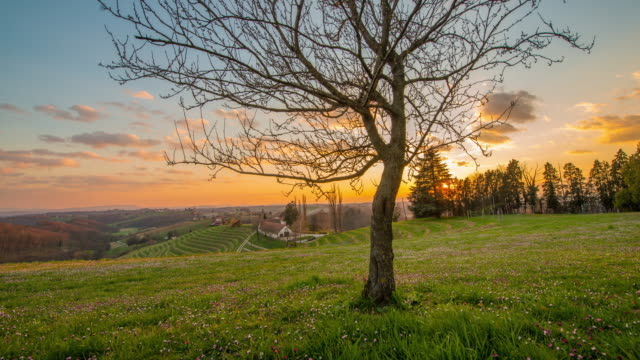 t/l 8k solitary tree at sunset - prekmurje stock videos & royalty-free footage