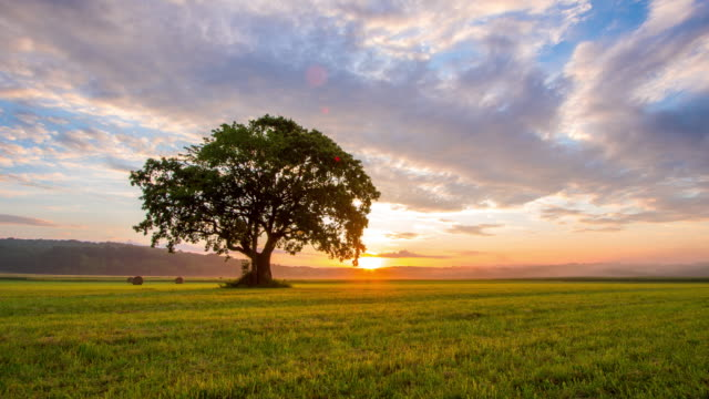 ds solitary tree in the field at sunrise - hay bale stock videos and b-roll footage