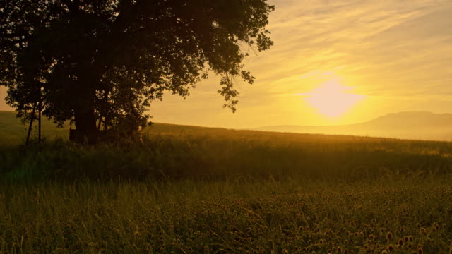 ds solitary tree in the meadow at sunrise - grass family stock videos & royalty-free footage