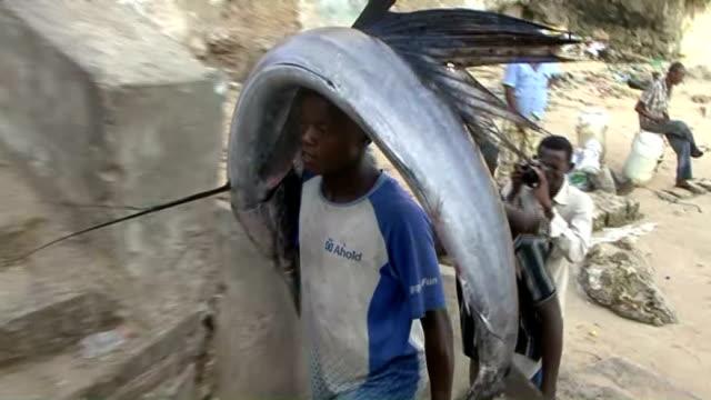 vídeos y material grabado en eventos de stock de somalian fisherman carries hammerhead sharks on his head from the port to the fish market on the eastern curubo beach of somalian capital city... - el cuerno de áfrica