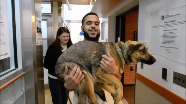 some 10 stray dogs from sochi russia arrive at the washington animal rescue league clean dogs rescued from sochi arrive on march 27 2014 in... - salvataggio video stock e b–roll