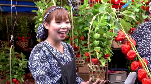 vídeos de stock, filmes e b-roll de some 120 road side shops are selling pots of hozuki or chinese lantern plant at sensoji temple in tokyo in the annual hozukiichi market held on july... - templo asakusa kannon