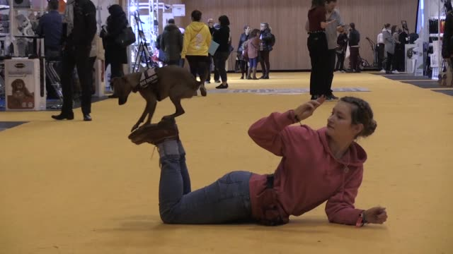 Some 1500 cats and dogs are expected at Paris's animal show where exhibitors offer everything from webcams for pets to healthier dog food