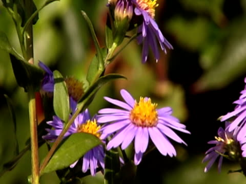 some bees flying on flowers ntsc - pistil stock videos & royalty-free footage