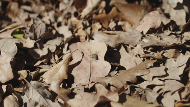 some dead leaves on the ground on the wood, a leaves fall and a fly on it that then flies away - soft focus stock videos & royalty-free footage