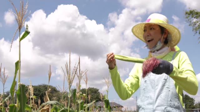 some families farming together in the community garden - agricultural activity stock videos & royalty-free footage