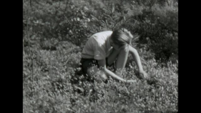 vídeos de stock e filmes b-roll de some friends harvesting blueberries and bring them to the city / shot in 1957 - sexo masculino
