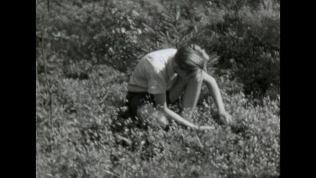 vídeos y material grabado en eventos de stock de some friends harvesting blueberries and bring them to the city / shot in 1957 - varón