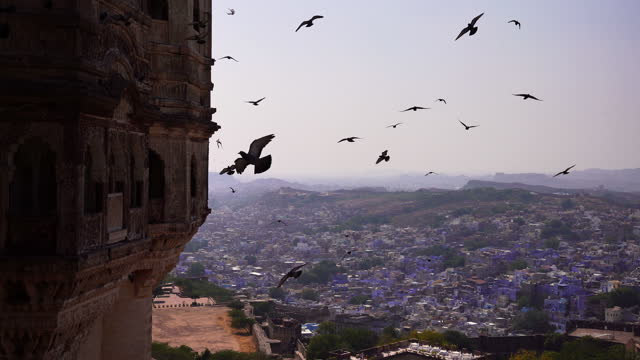 some pigeons flying at sunset on the udaipur city palace, rajasthan, india - palace stock videos & royalty-free footage