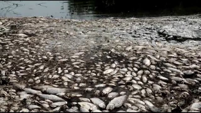 some thousands of dead fish lie on a beach of lake koroneia in northern greece as a result of high temperatures and declining water levels... - fish stock videos & royalty-free footage