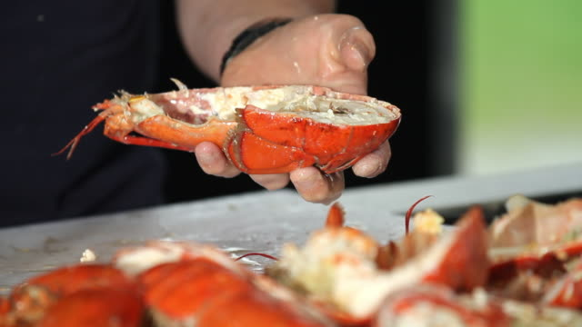 someone empty lobster from its chair and its liquid - lobster seafood stock videos and b-roll footage