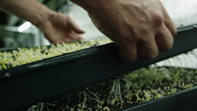 someone picks up a tray of plants - hydroponics stock videos & royalty-free footage