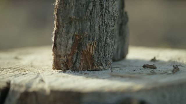 someone places a log on a stump for splitting - tagliaboschi video stock e b–roll