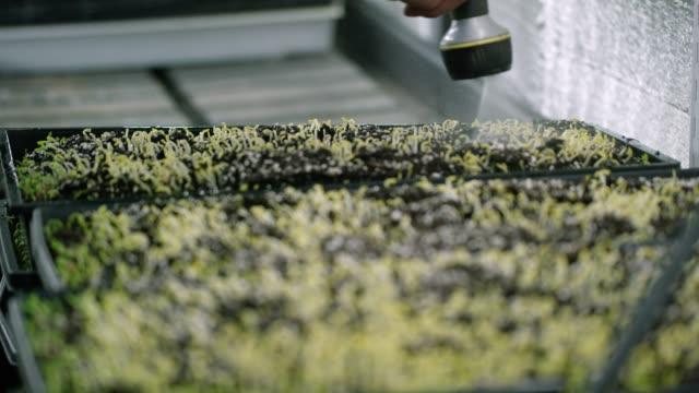 someone waters seedlings - hydroponics stock videos & royalty-free footage