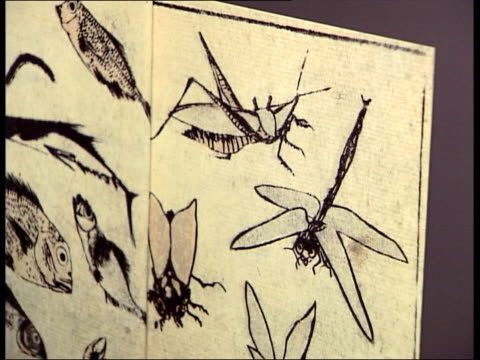 somerset house exhibition of 150 years of tiffany jewellery design more exhibits of jewellery / drawings of insects and fish / wide of display... - metalwork stock videos and b-roll footage