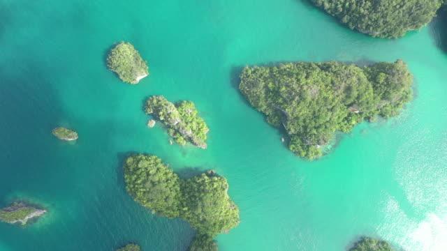 vídeos de stock, filmes e b-roll de em algum lugar bonito para se perder - árvore tropical
